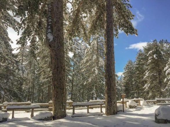 Parco della Sila, oggi - Lago Arvo Ghiacciato Fonte Sonia Ferrari2