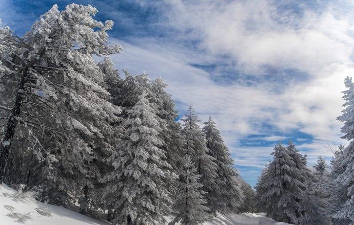 Sila. testo e fotografie di Giuseppe Intrieri. Fonte: http://www.nationalgeographic.it