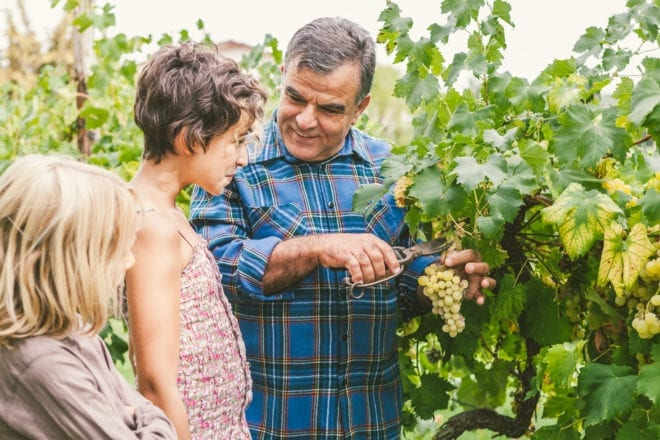 Grandfather Teaching Grandchildren How to Cut Grapes