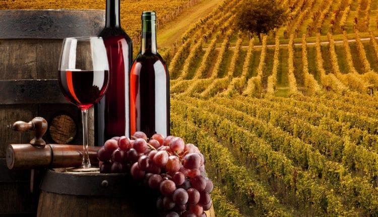 Quais são as melhores vinícolas da Calábria?