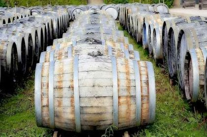 What Are The Best Wineries In Calabria?